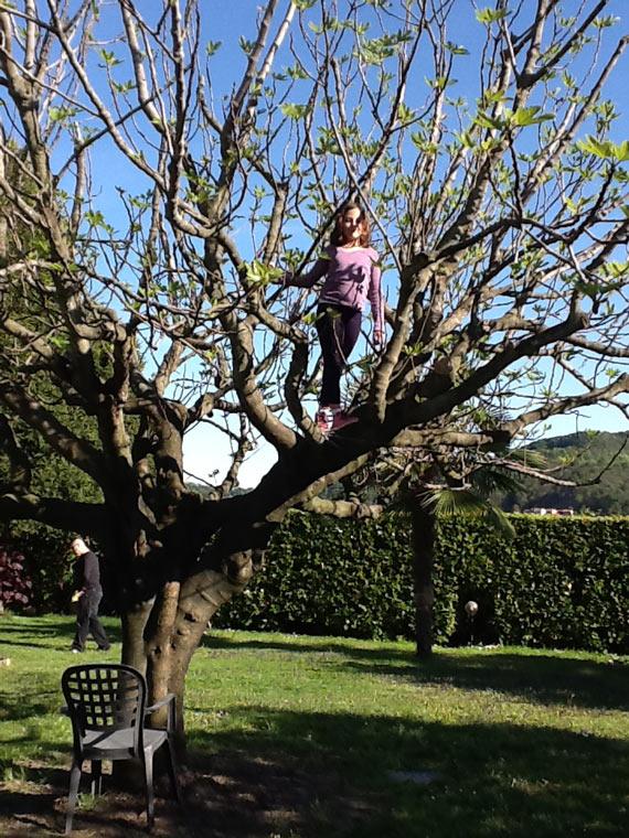2012-castiglione-bianca-albero-02