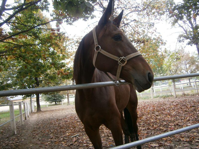 Il cavallo dell'ippodromo